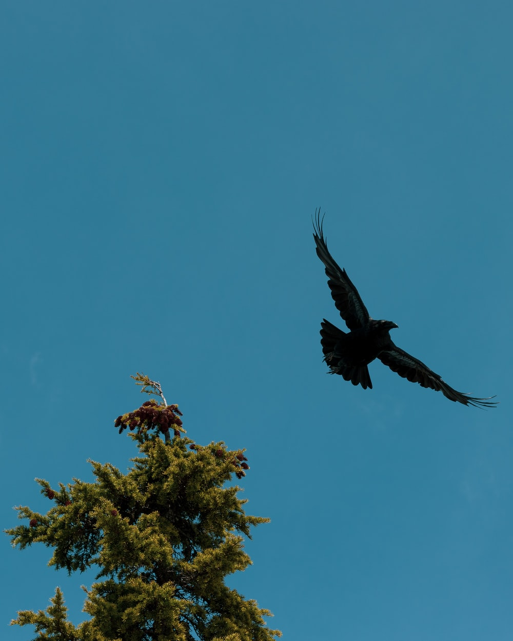 black eagle flying near tree