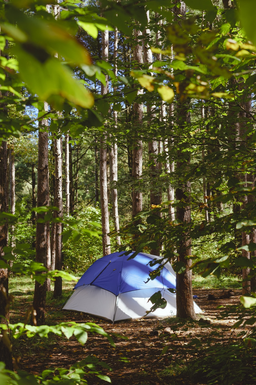 dome tent surrounded with trees