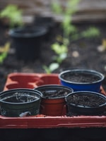 Benefits of Raised Gardening Beds