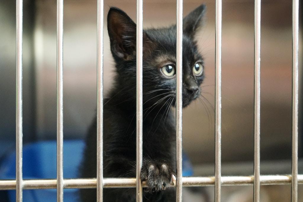 shallow focus photography of black kitten