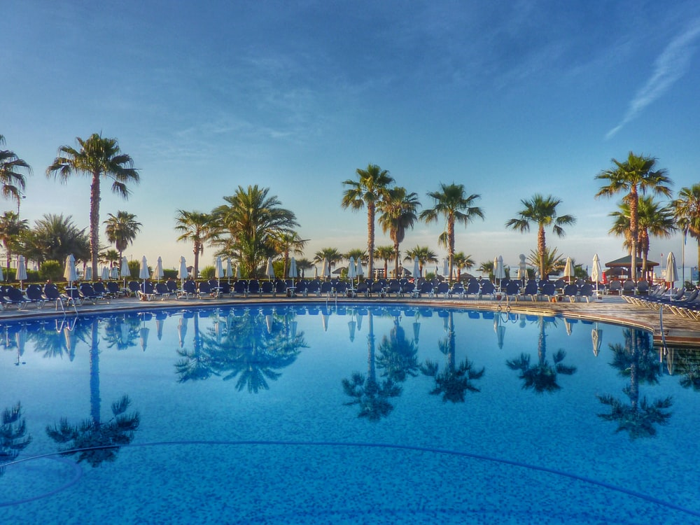 green palm trees near swimming pool during daytime