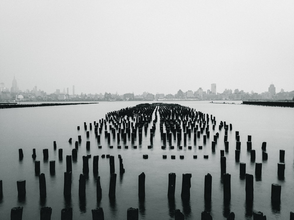 black log in body of water