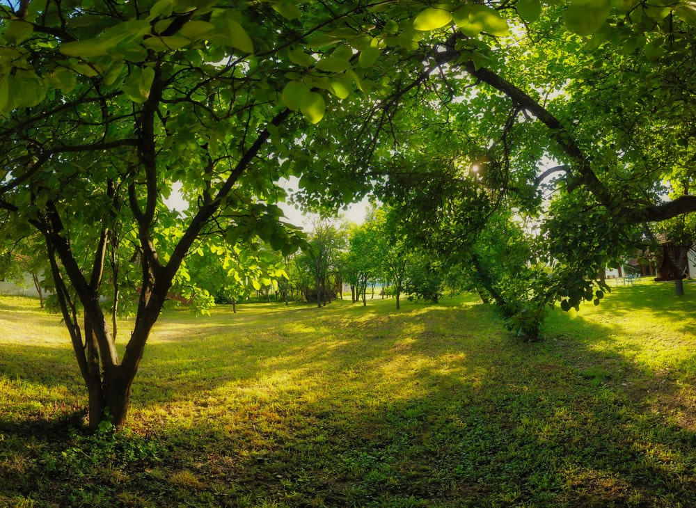 green-leafed trees during daytime
