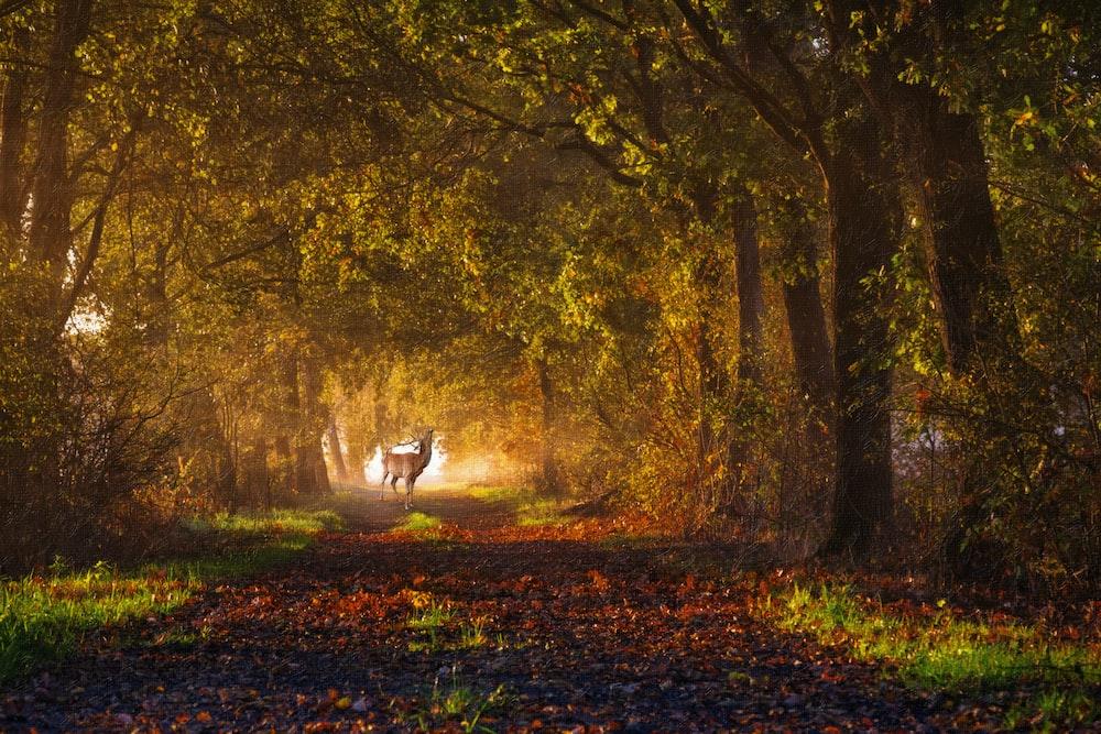 deer between forest