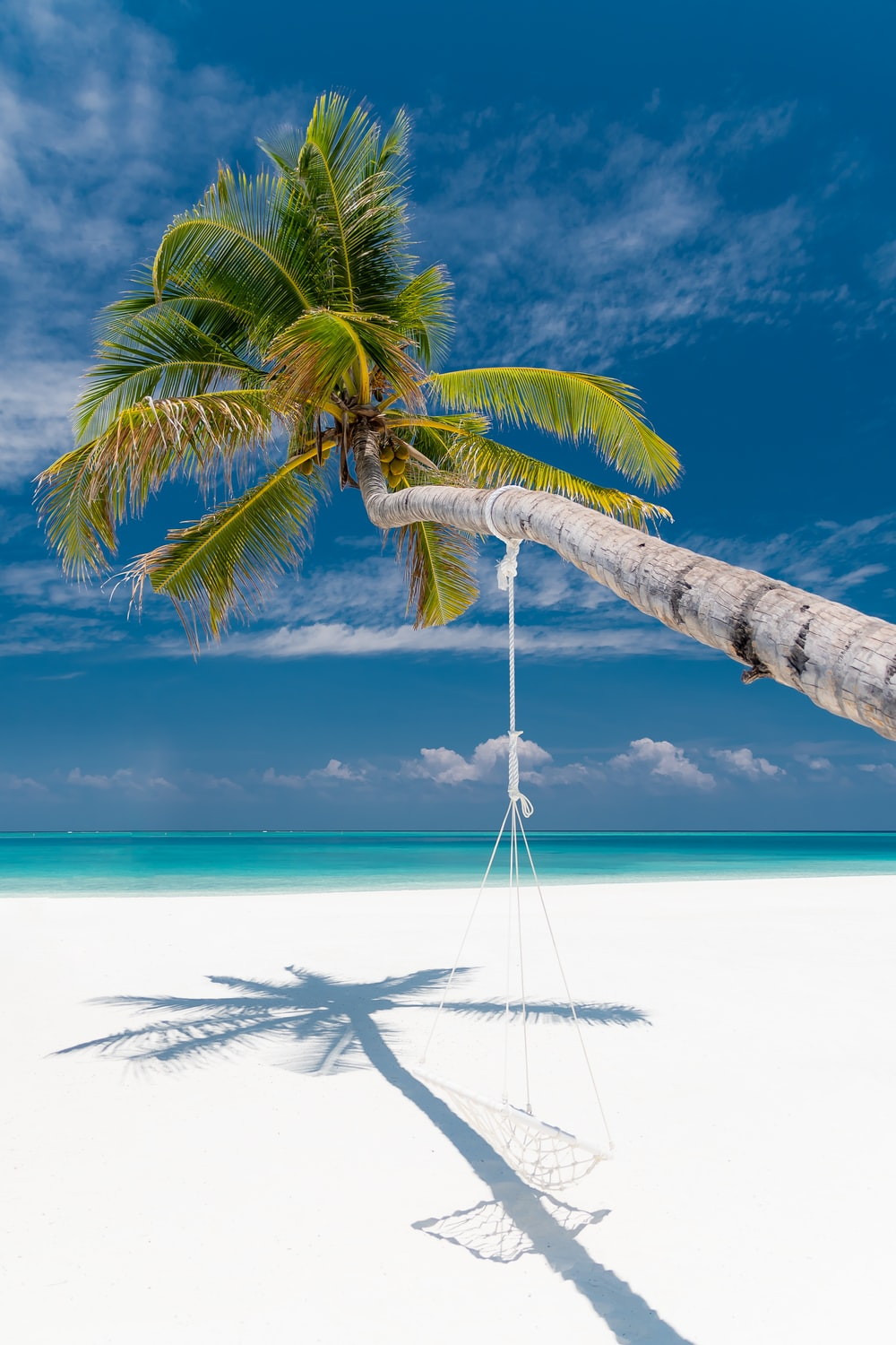 bent coconut tree with hammock near shore during daytime