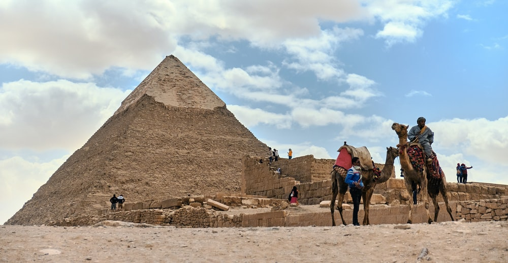 two camel st anding near pyramid