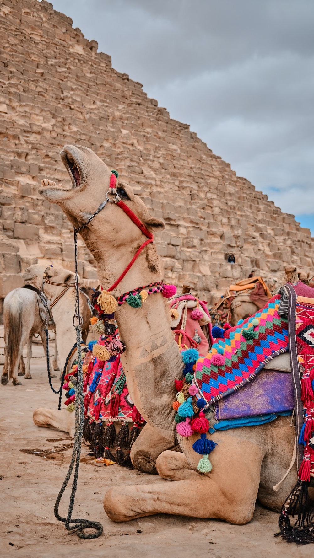 camel sitting on ground near pyramid during daytime