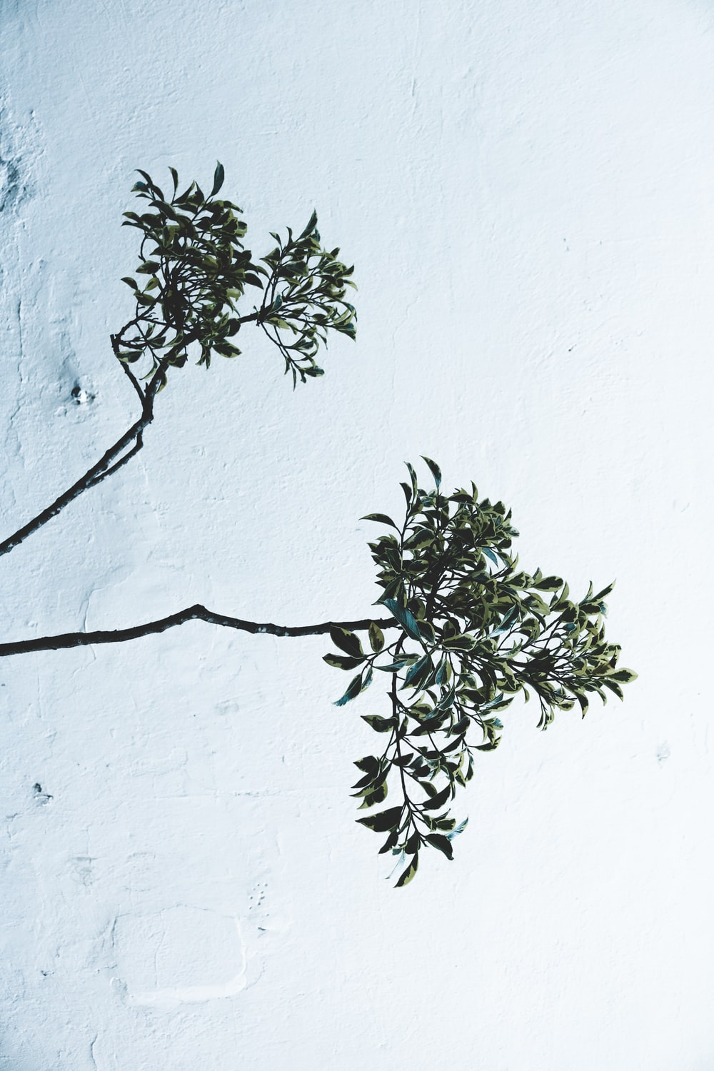 green shrub in front white painted wall