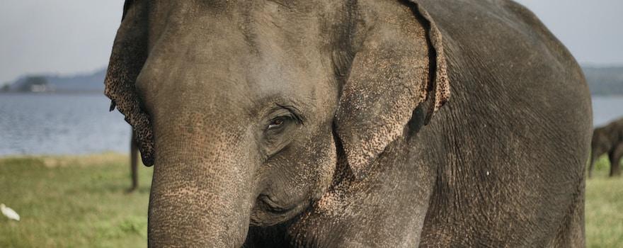 brown elephant on grass