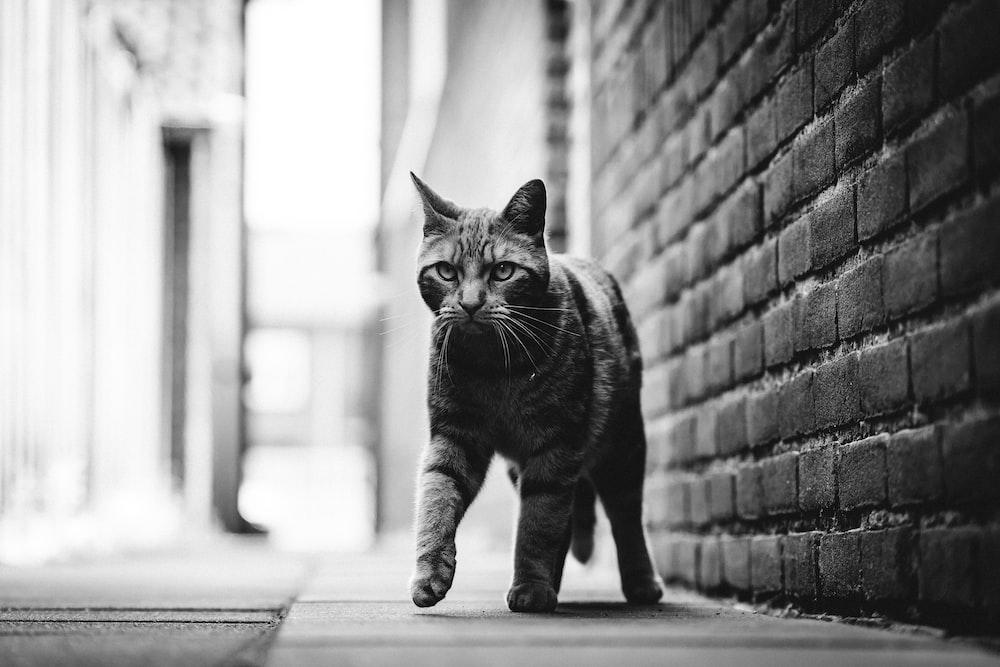 tabby cat standing near wall