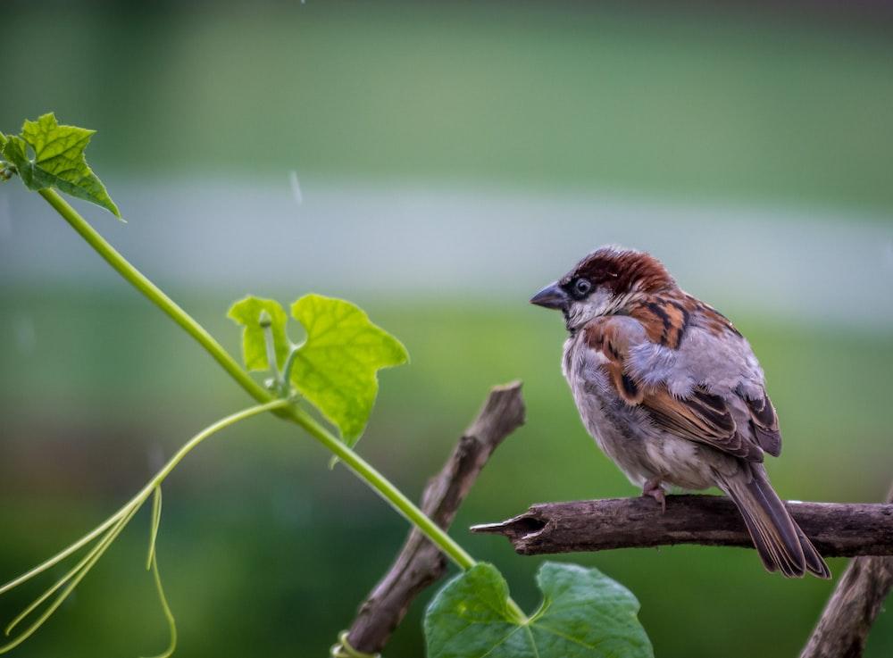 brown sparrow bird on brown twig near green leaf plant