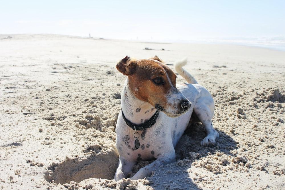 pet dog digging sand