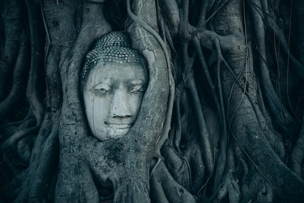 buddha head covered branch