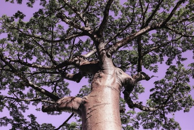 low angle photography of green-leafed tree during daytime madagascar teams background