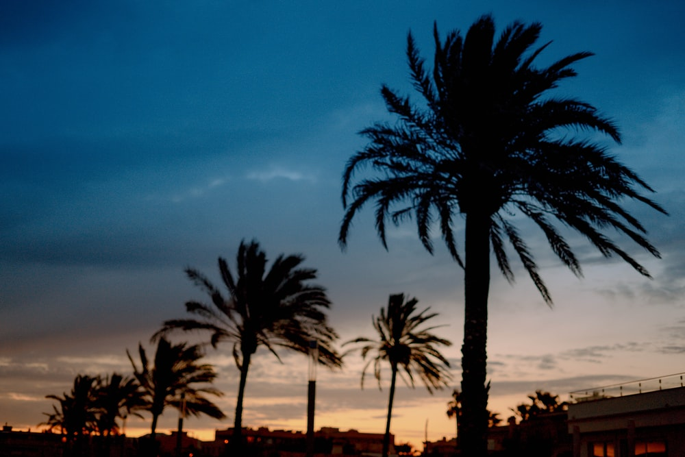 palm trees and buildings during day
