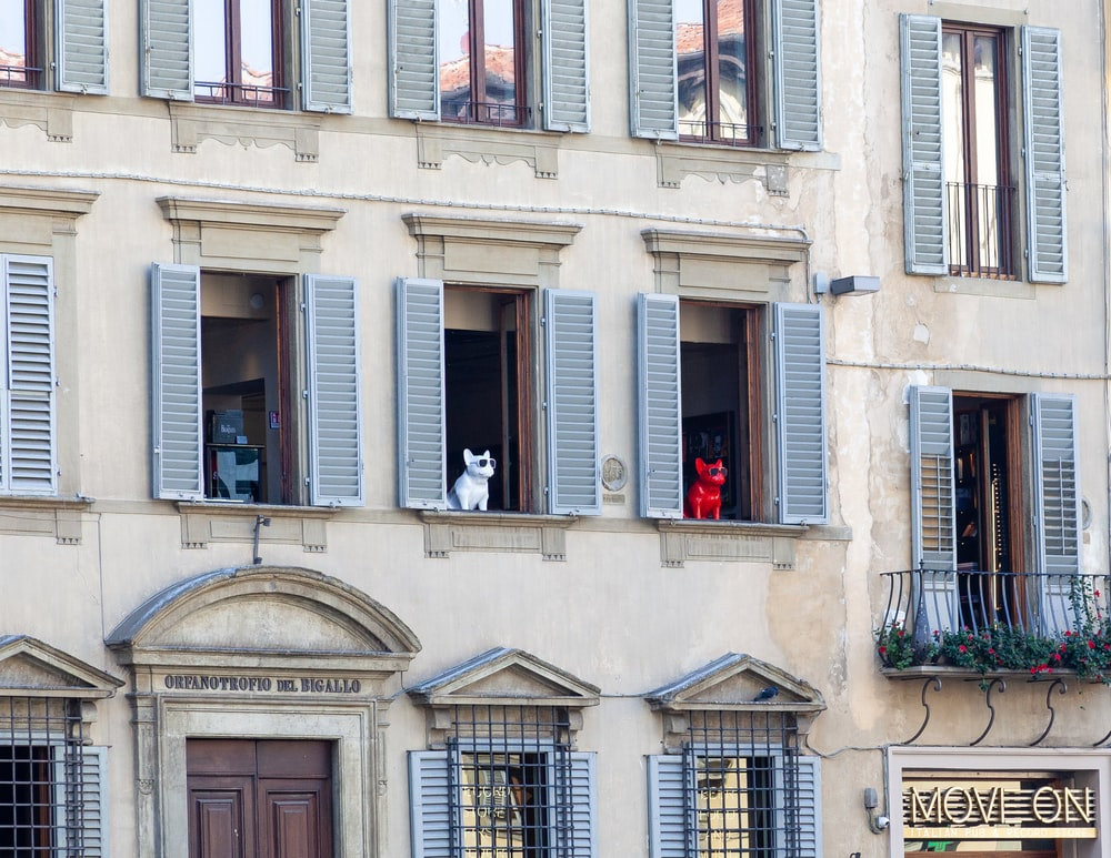 dog seated on building window