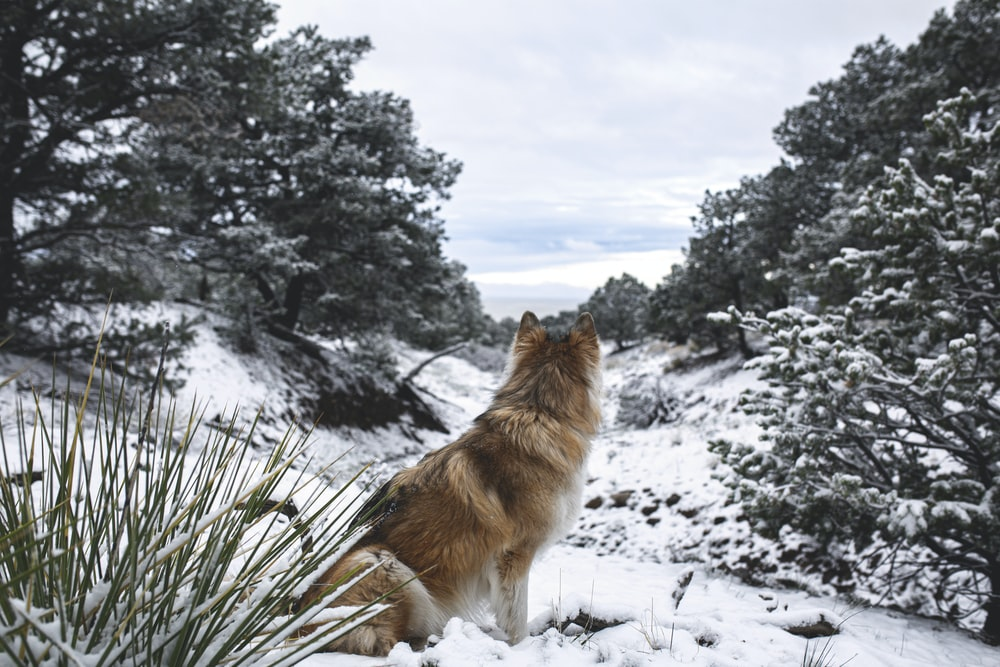 brown dog near trees during snow