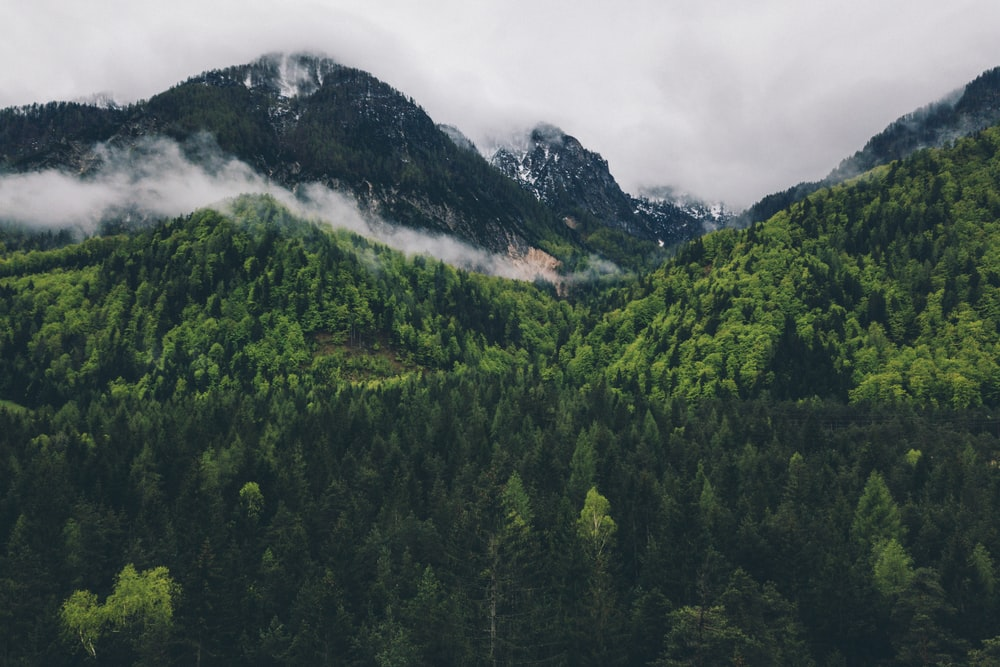 aerial view of trees and mountain