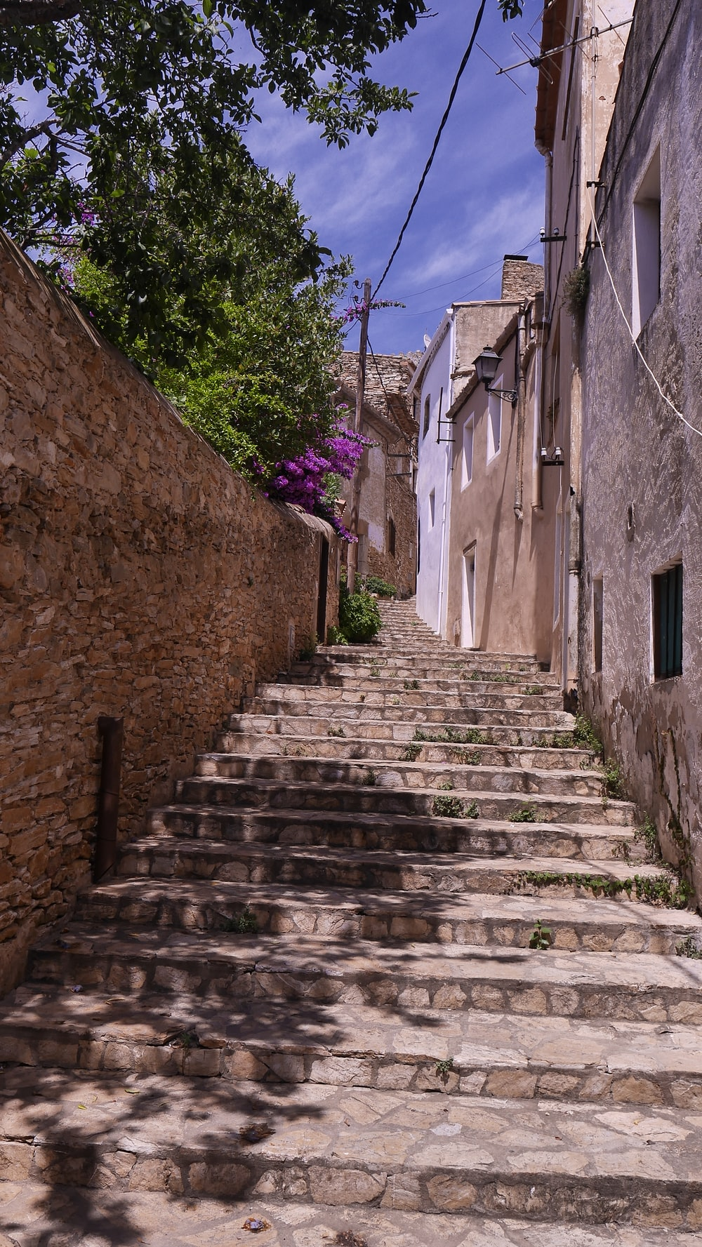stairs beside purple flowers during daytime