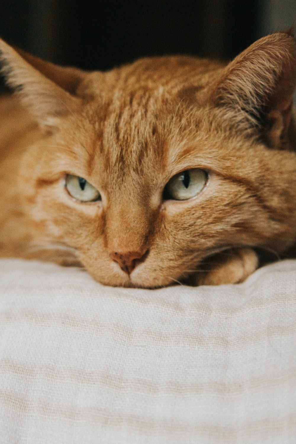 orange tabby cat lying on white textile