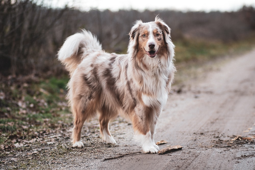 white and brown dog on road