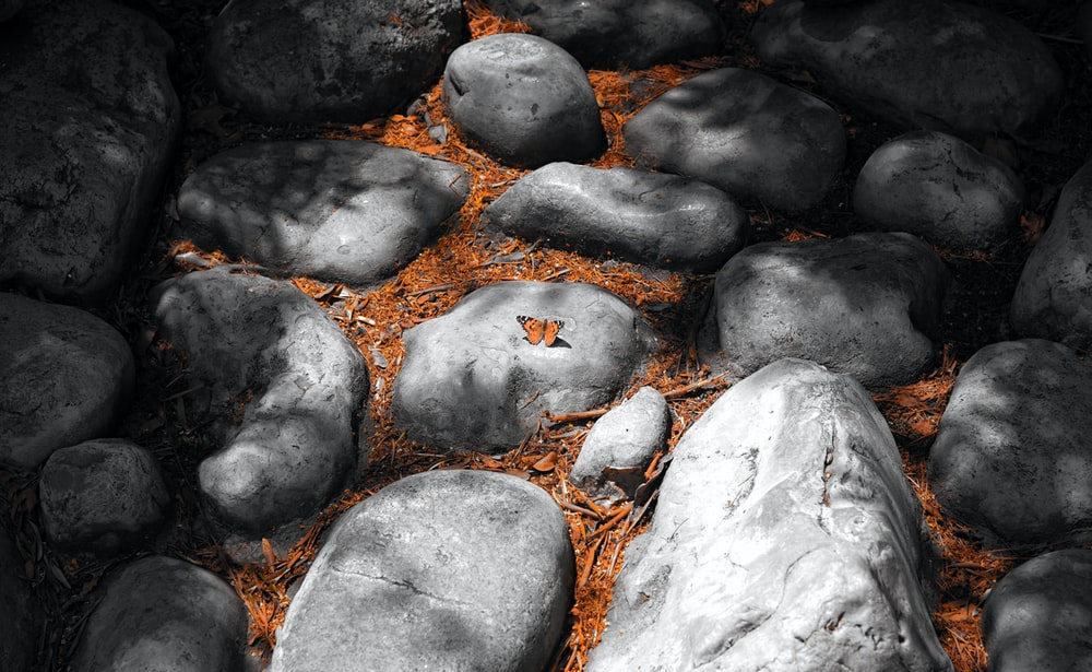gray rocks and brown leaves