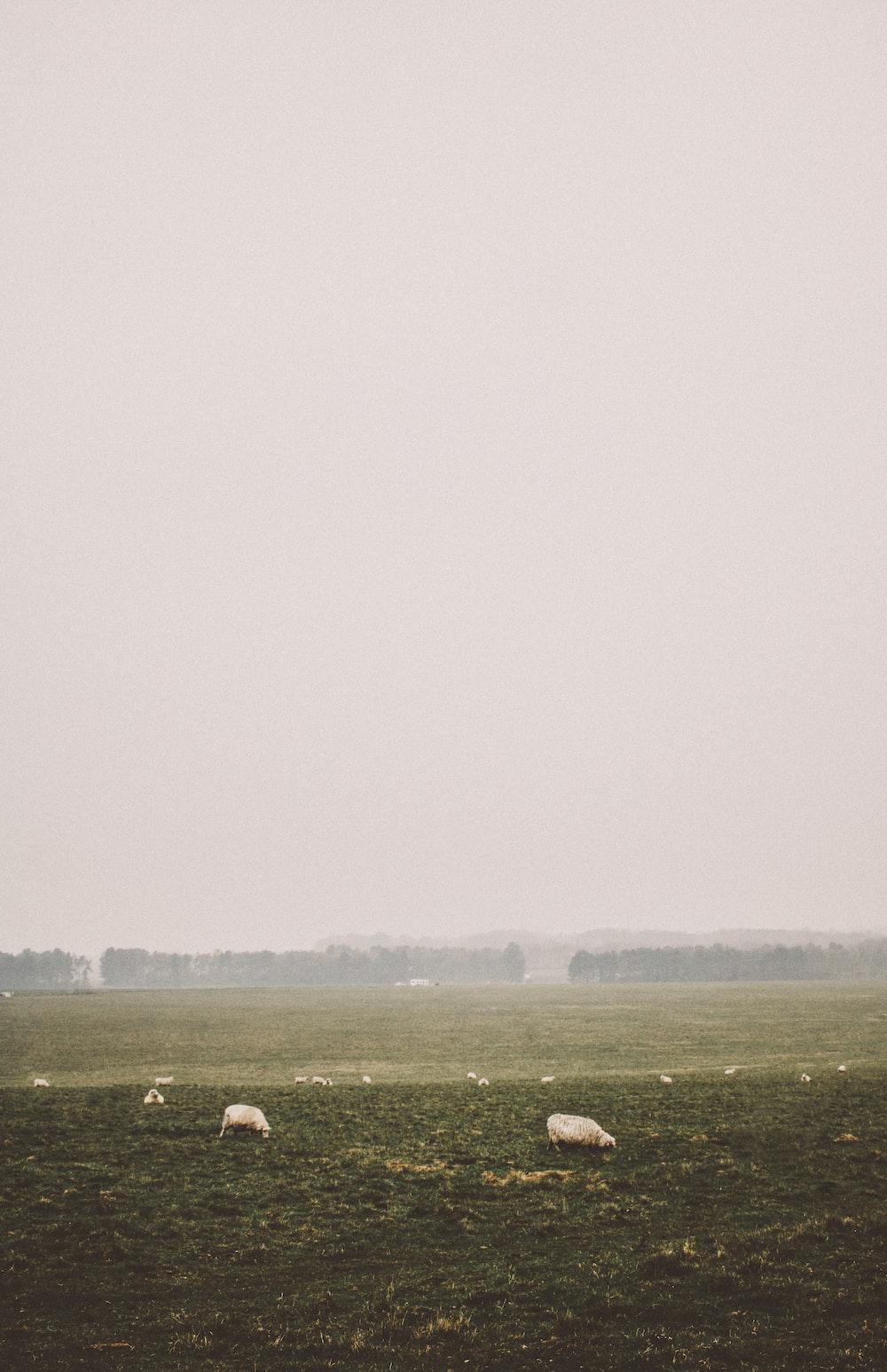 green open field on foggy season