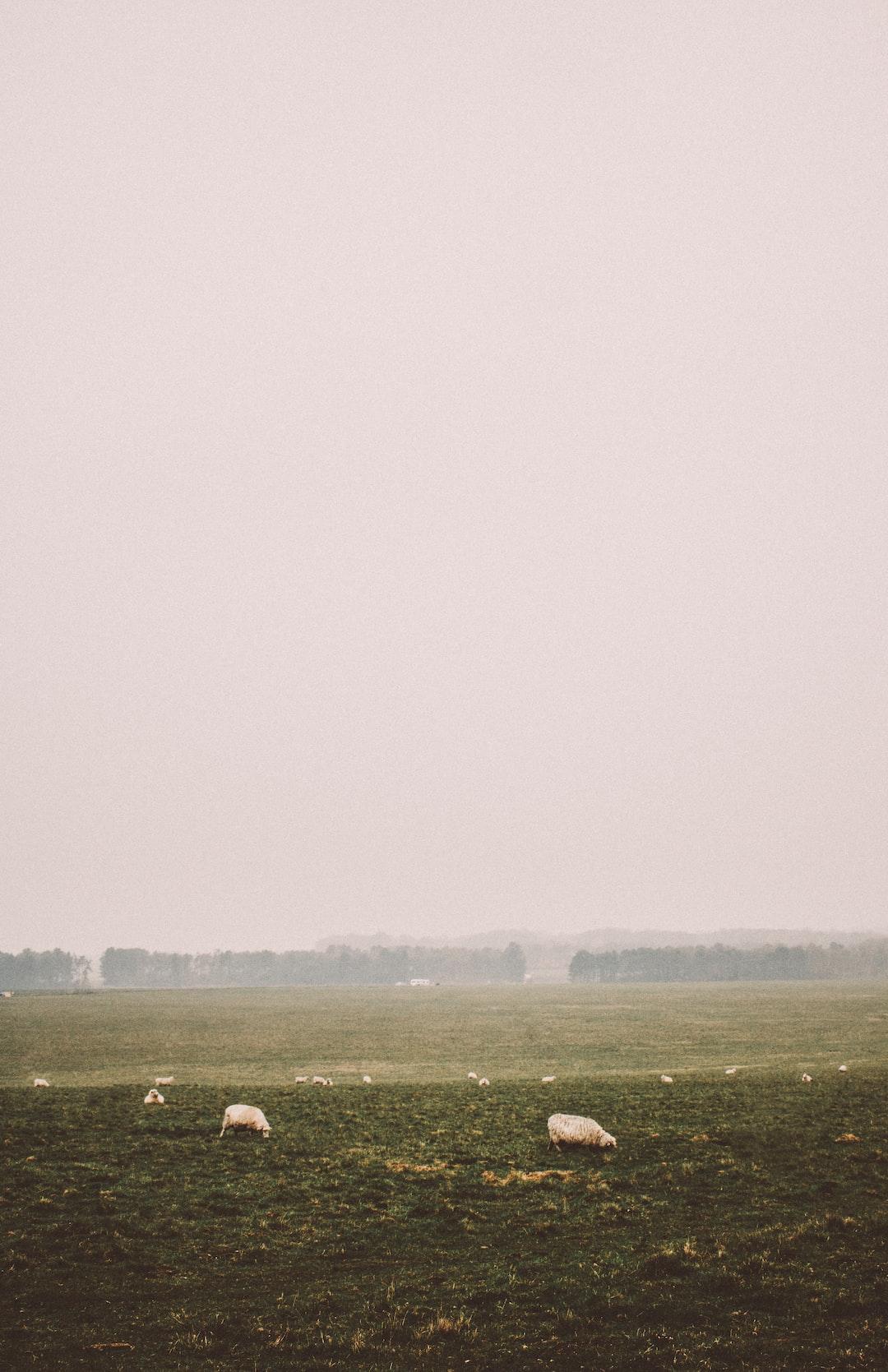 green open field on foggy <b>season</b> photo – Free Nature Image on ...