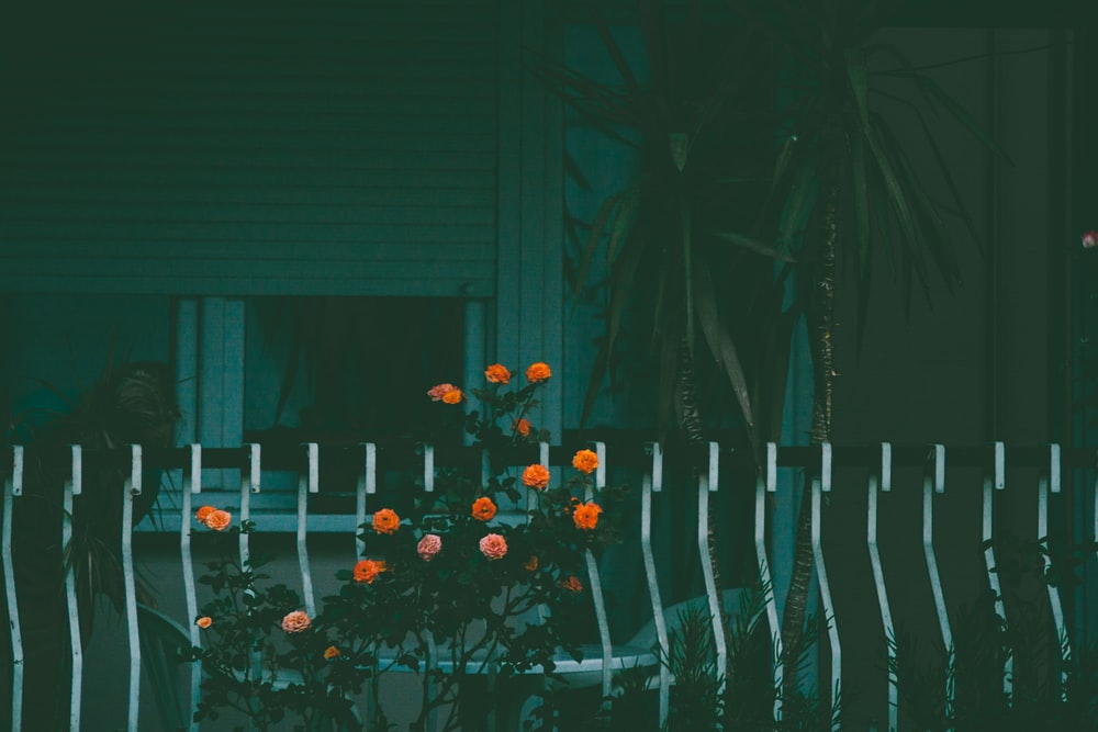marigold flowers near fence