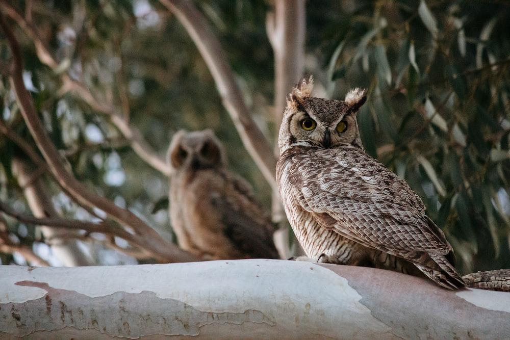 owl on tree branch