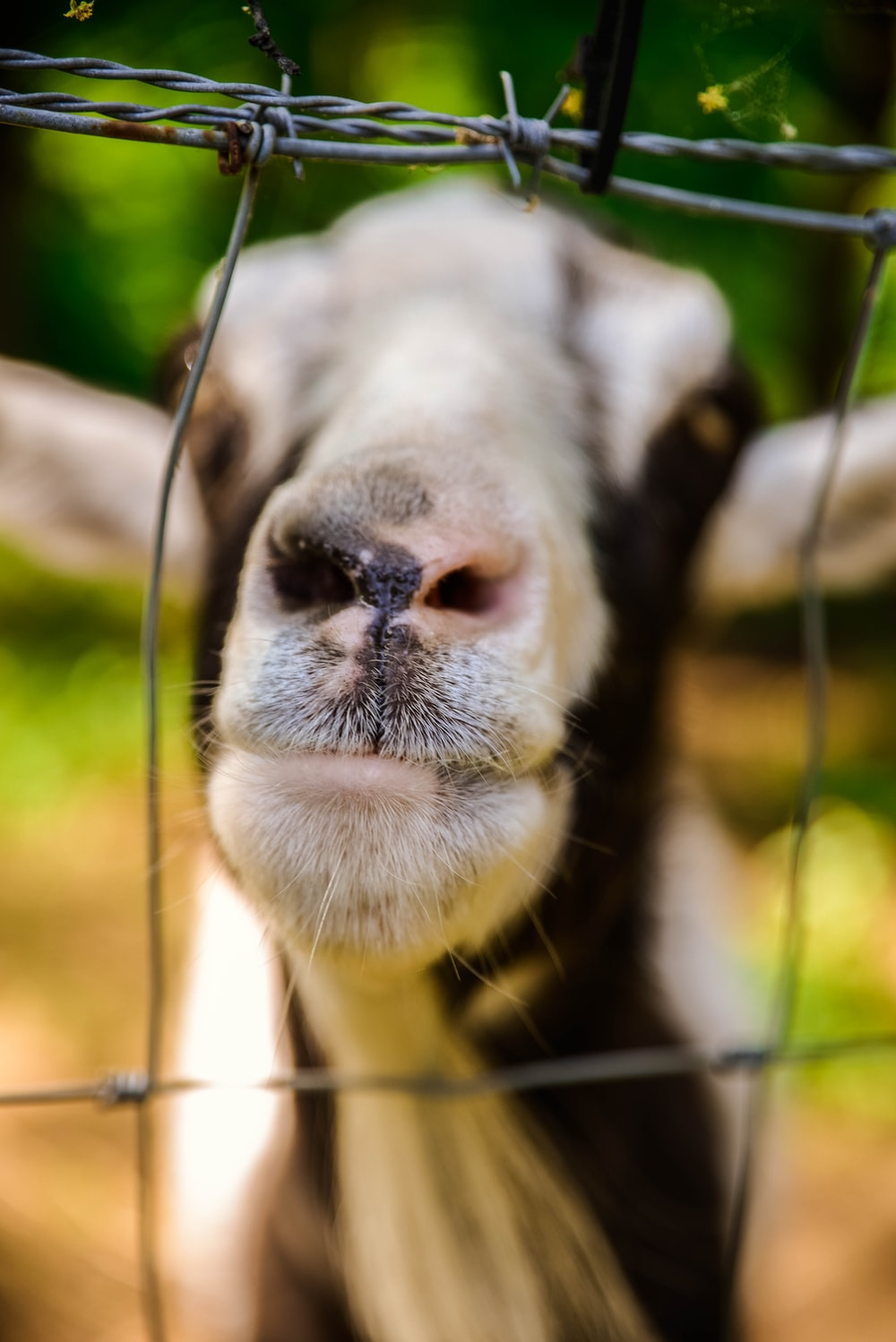 close-up photography of goat