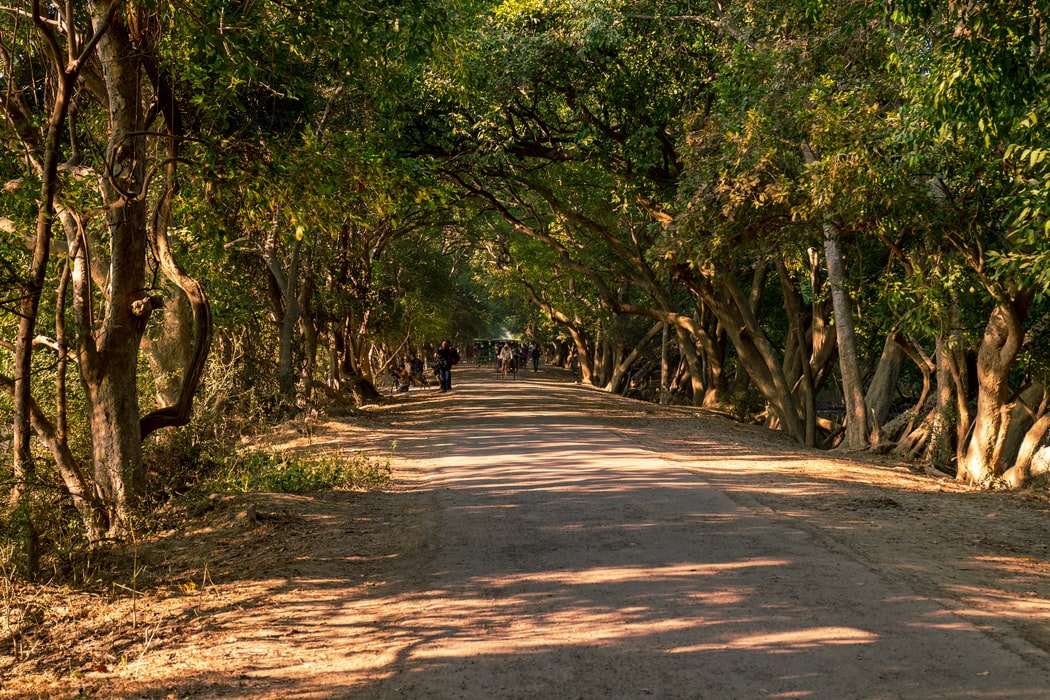 Road to Kumarakom Bird Sanctuary