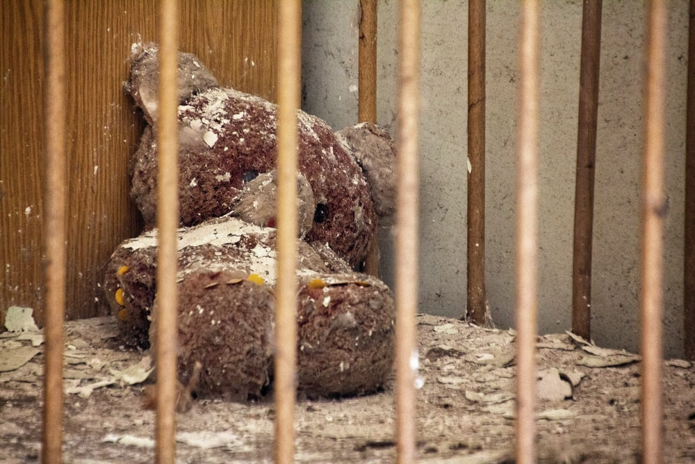 brown bear plush toy in cage