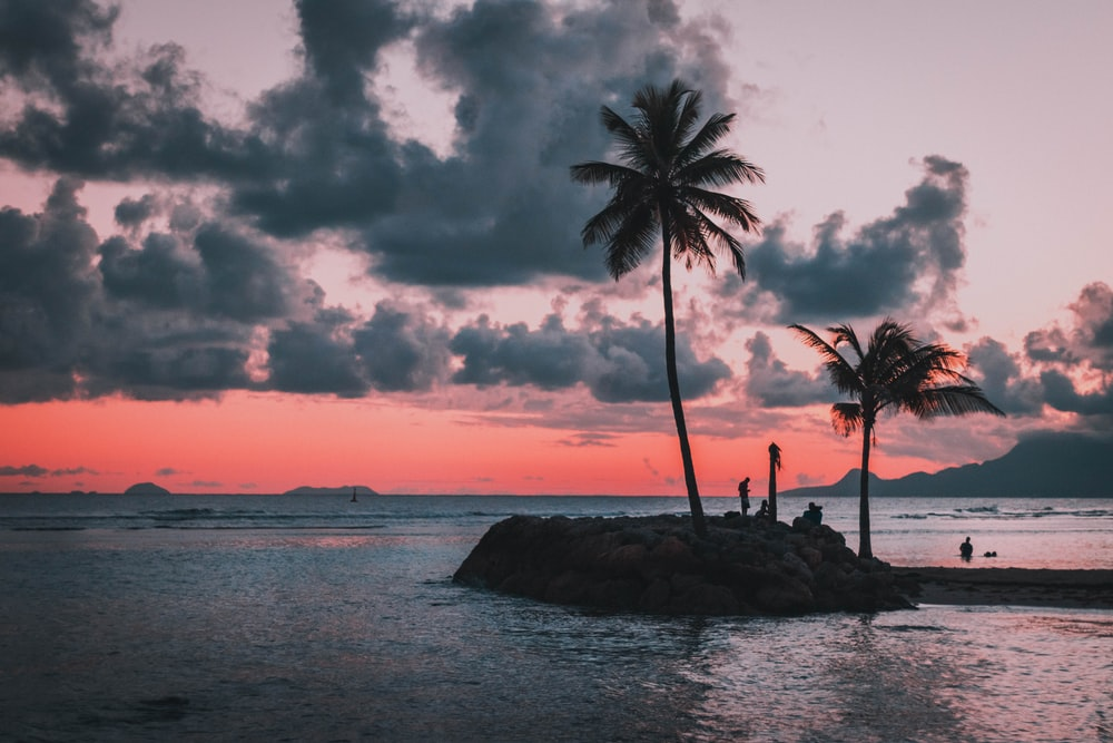 green island with coconut trees under gray skies