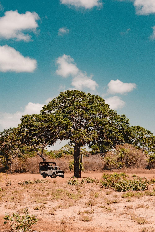 vehicle parked near tree
