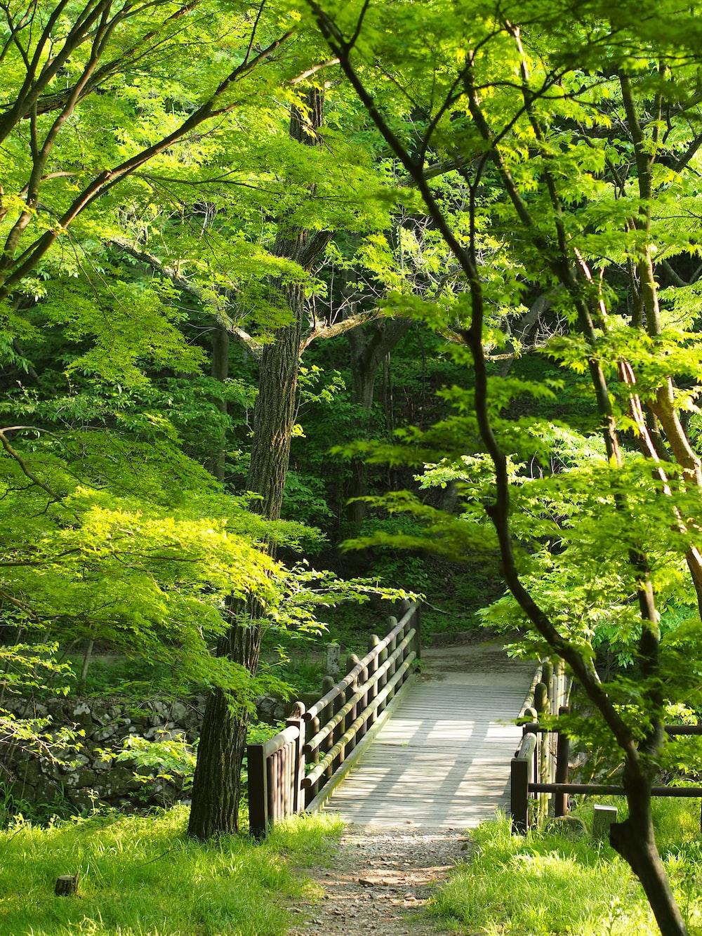brown wooden bridge around trees