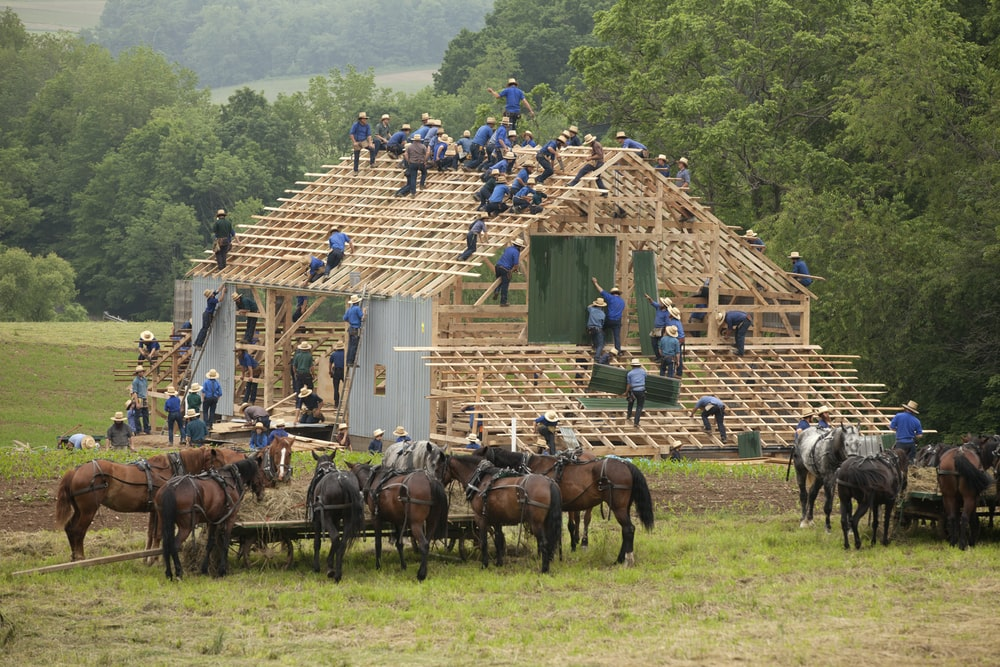 people making house with horses
