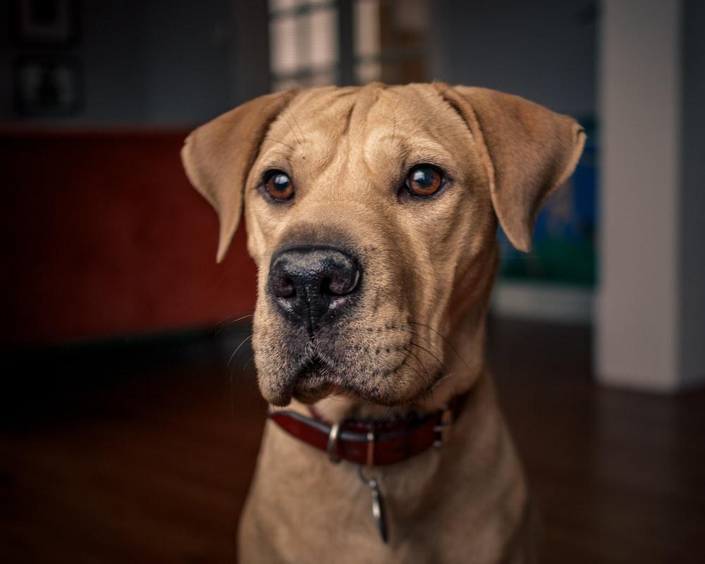 brown dog sitting on ground