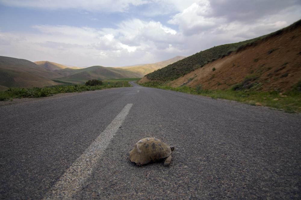 turtle crossing highway