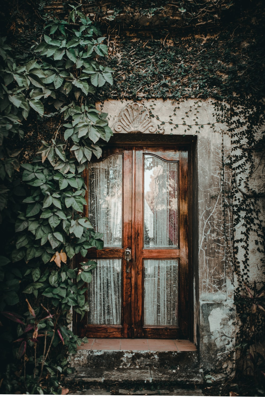 brown window near plant on wall