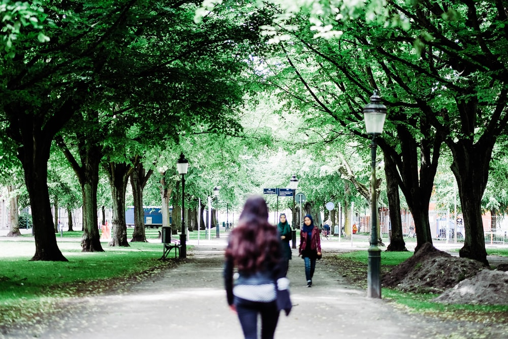woman walking between green leafed trees