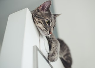 gray cat on white wall