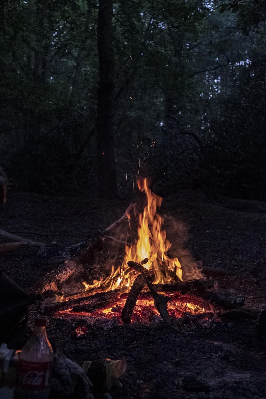 lit bonfire in woods