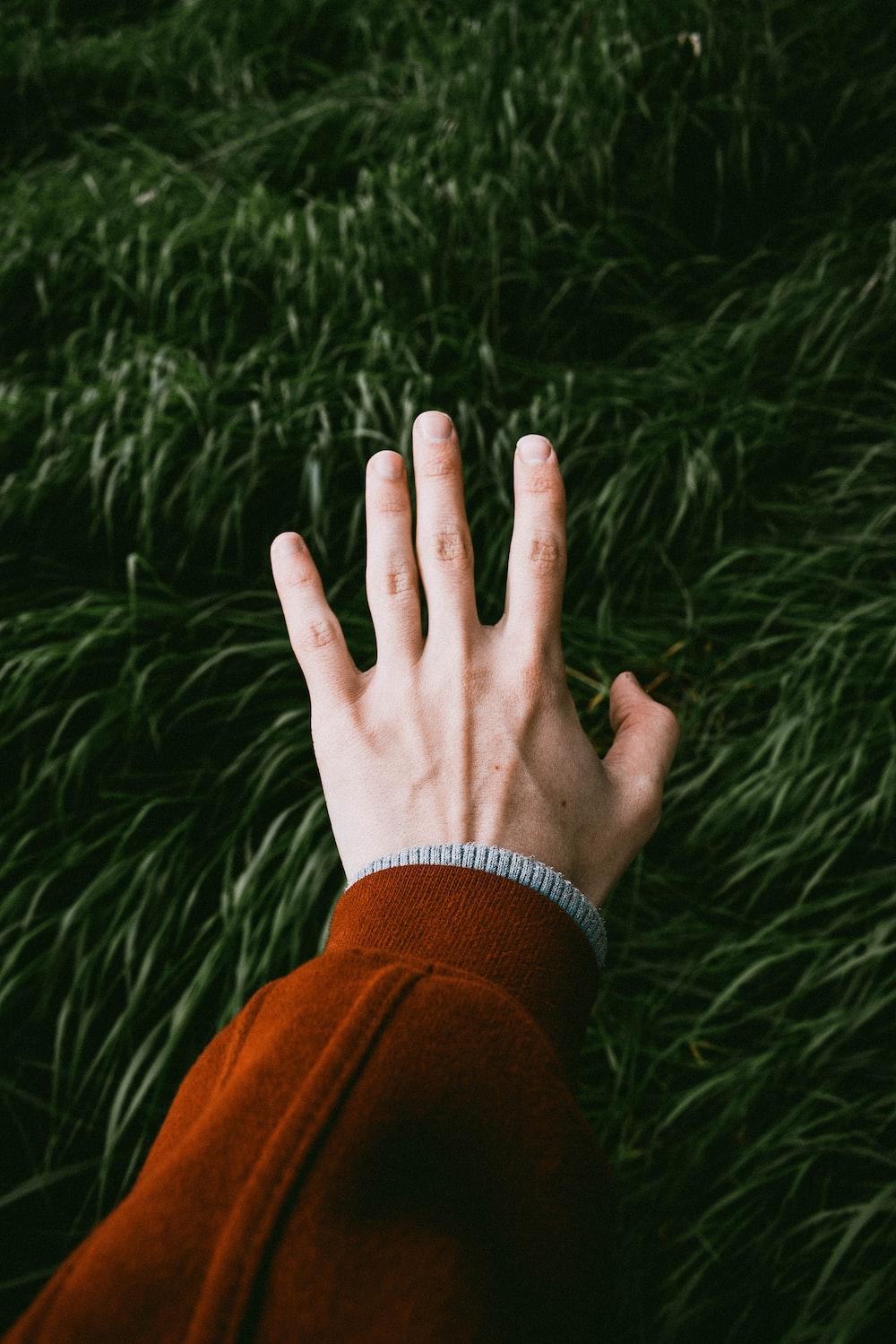 person touching green grass