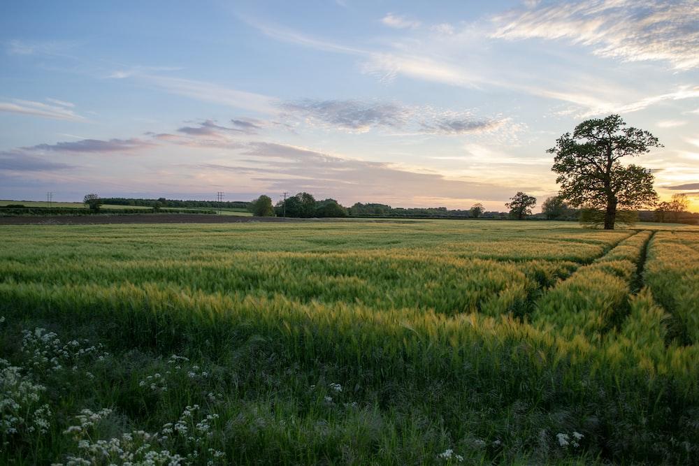 grass field under clear sky during sunet