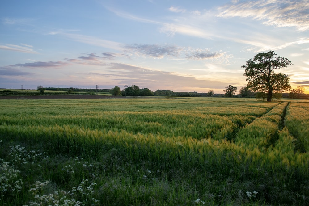 grass field under clear sky during sunet