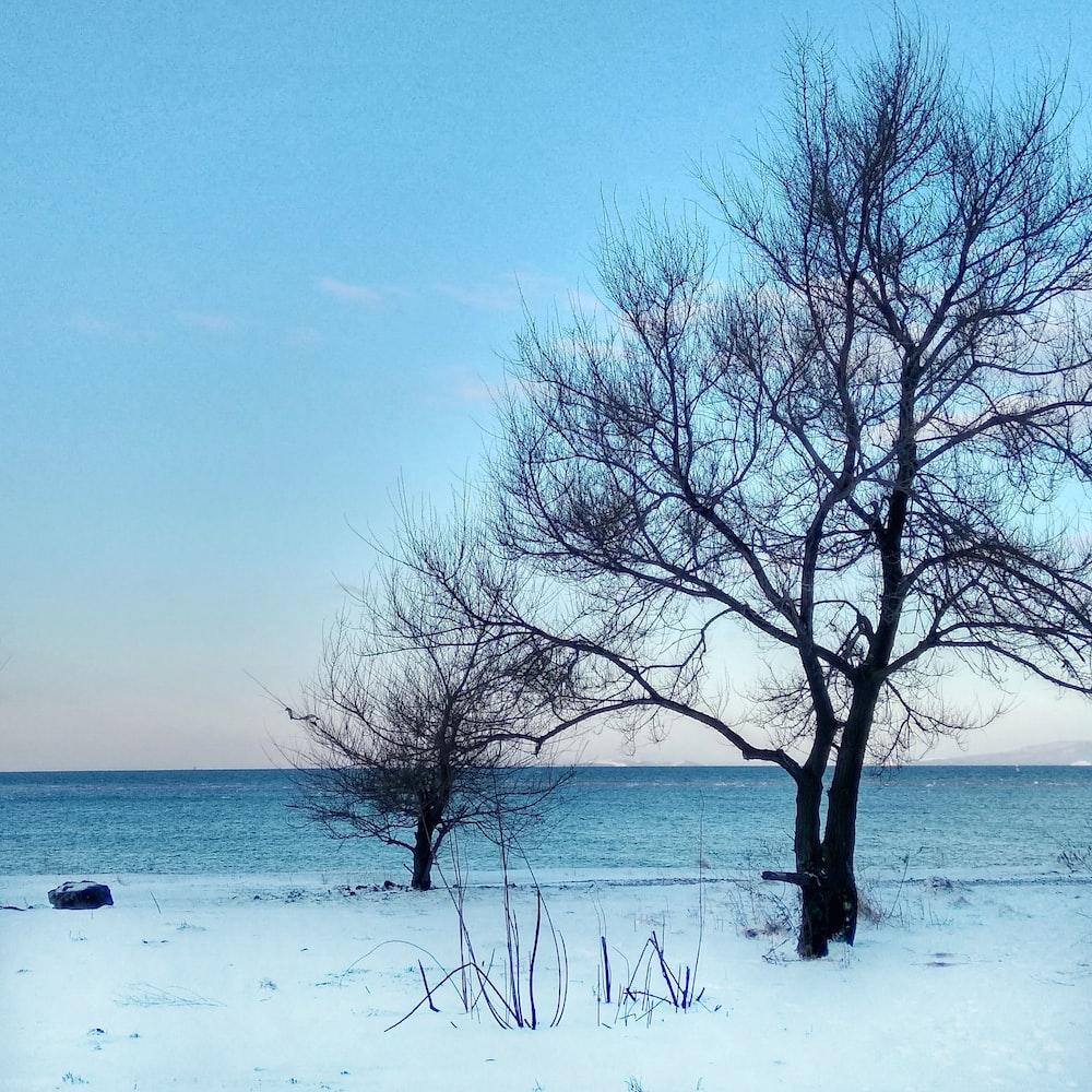 black tree during daytime