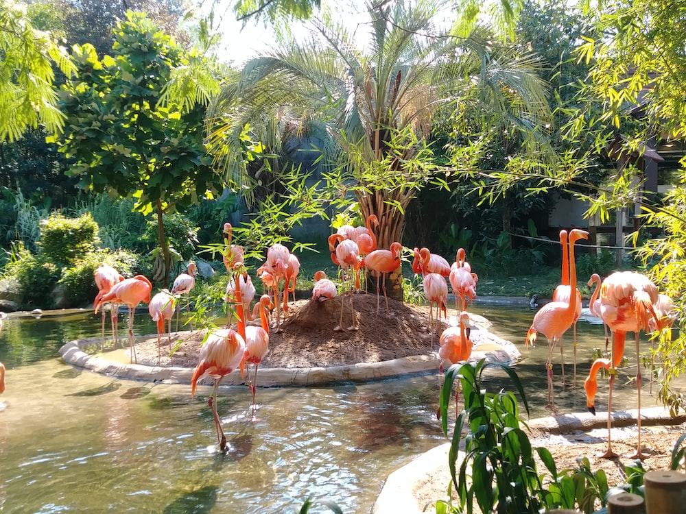 flamingo on pond