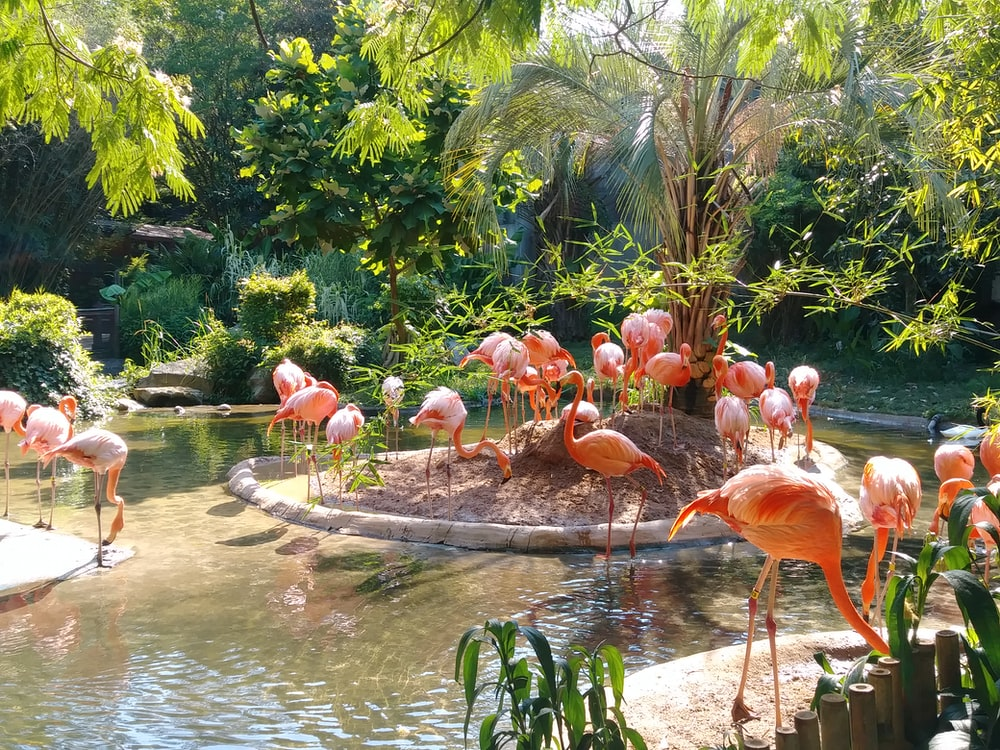group of Flamingo walking and standing on forest