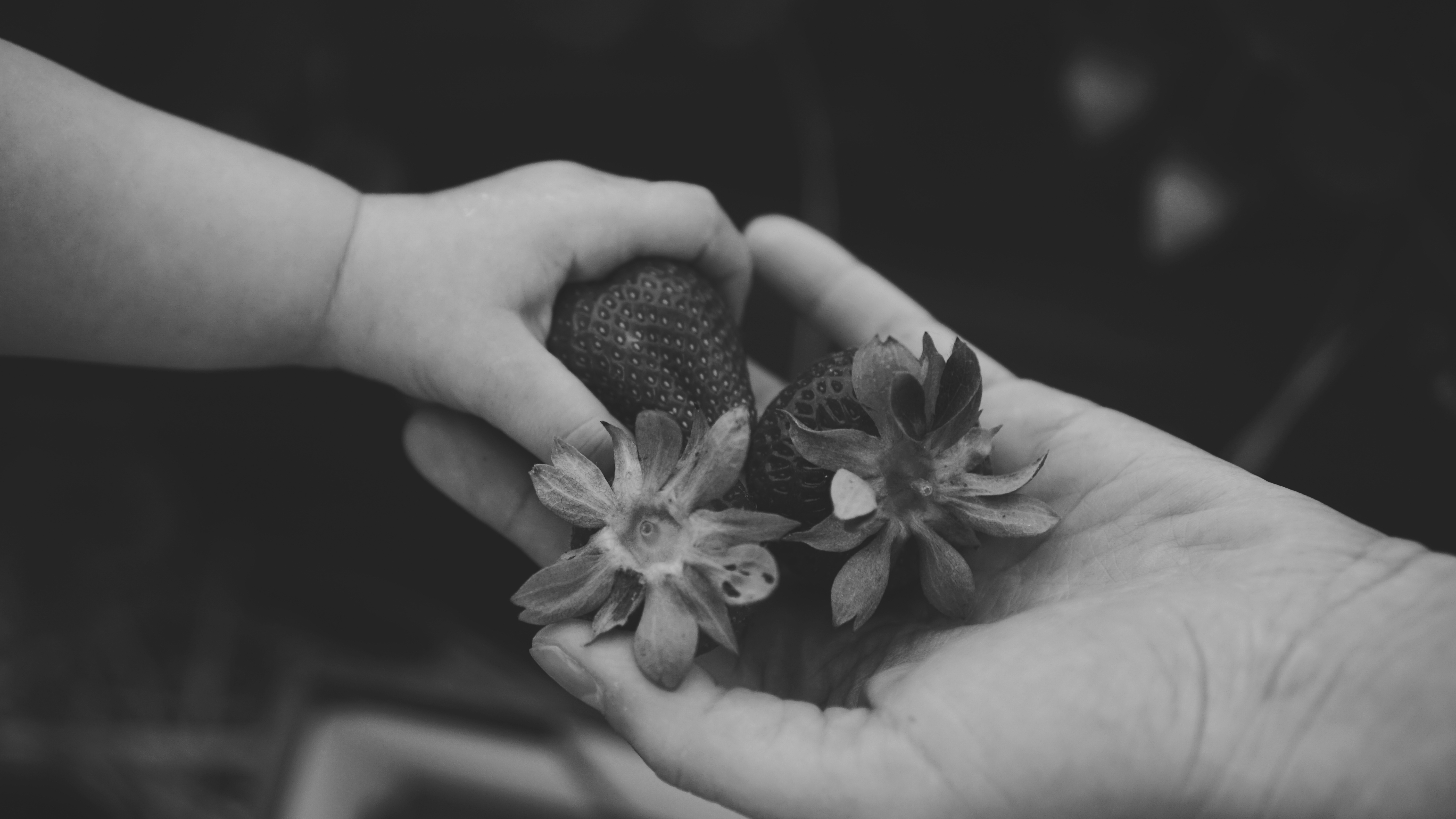 grayscale photo of person holding strawberries